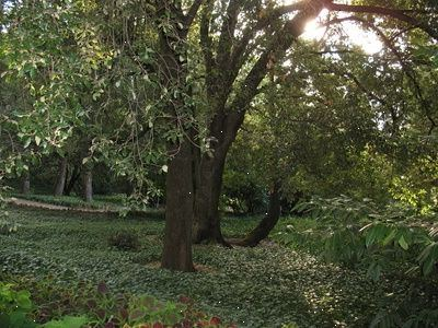Hvordan å vokse en mose hage: landskapsarbeid ideer